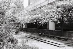 Thursday in the park (yasu19_67) Tags: nikonfe10 voigtlanderultron40mmf2slii 40mm lomography lomographyladygreybw400 bw monochrome park film filmism filmphotography analog sunlight atmosphere photooftheday osaka japan