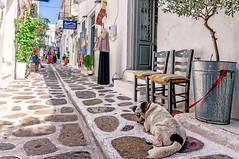 Parikia, Paros (Kevin R Thornton) Tags: d90 nikon travel street parikia mediterranean greece dog paros egeo gr