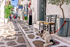 Parikia, Paros (Kevin R Thornton) Tags: d90 nikon travel street parikia mediterranean greece dog paros egeo gr