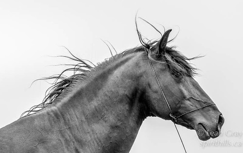 """Stallion • <a style=""""font-size:0.8em;"""" href=""""http://www.flickr.com/photos/106269596@N05/34628399725/"""" target=""""_blank"""">View on Flickr</a>"""