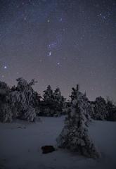 Frozen pines and winter sky , Crimea (Mike Reva) Tags: astronomy astrophoto astrophotography astro stars sky stargazing snow stillness samyang24 starrynight milky milkyway night nightsky nature nghtsky nightscape nights crimea astrometrydotnet:id=nova2071986 astrometrydotnet:status=solved
