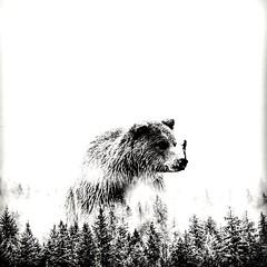 #osos #bears #bear #instabear #beargay #followbear #beard #beardgay #followgay #ursos #follow4follow #followforfollow #followback #like4like #likeforlike #likegay #sdv #geek #nerd #starwars #harrypotter #gaynerd #geekgay #labioguia #barba #barbon #urso #b (freddyvonrush) Tags: bears beard bearcity followback followforfollow beardlove nerd urso sdv follow4follow osos beargay harrypotter likeforlike ursos instabear starwars geek barba beardgay beardlife labioguia barbon like4like followgay followbear gaynerd bear geekgay likegay