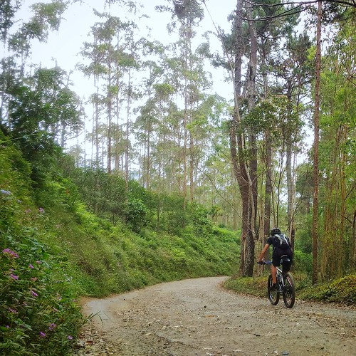 Descending Road through Bukittunggul Plantation
