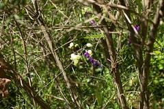 Senza titolo (albert.o_bertoni) Tags: fiori piante categoria complesse genere marca natura razza risma sorta specie stampo varietà