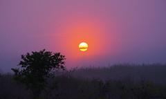 Sunrise on the Prairie (explored) (bencvengros) Tags: indiana prairie grass grassland sunrise sun rise united states north america ben cvengros landscape purple pink light fog
