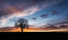 Alone at dawn (grbush) Tags: dawn daybreak sunrise tree lonetree minimalism minimalist clouds sky silhouette bedfordshire solitude sonyslta77 tokinaatx116prodxaf1116mmf28 rural countryside england morning