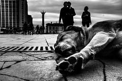 İzmir noire (anilaydn) Tags: izmir turkey dog bw vsco popular street fuji fujifilm x100s