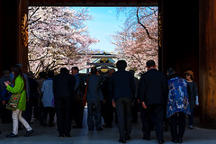 Cherry Blossom in Yasukuni Shrine : 靖国神社の桜 (Dakiny) Tags: 2017 spring april japan tokyo chiyoda chiyodaward kudanshita city street outdoor architecture building shrine yasukuni yasukunishrine plant tree flower cherry blossom cherryblossom sky blue nikon d7000 sigma 1770mm f284 dc macro os hsm sigma1770mmf284dcmacrooshsm nikonclubit
