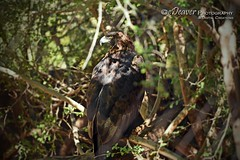 """Phoenix Zoo"" (eDeaver Photography) Tags: arizona phoenix animal animals nature safari park wildlife zoo landscape outdoors wild edeevo edeaver edeaverphotography digitalcreations creations nikon"