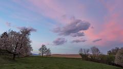 Couleurs du soir 1 (Martial Blanchoud) Tags: soir nature nuages paysage suisse vaud arbres olympus ngc clouds cloudsstormssunsetssunrises coucher campagne