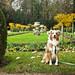Laika Exploring Gardens of Château de Chenonceau   France