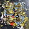 Troubled with lichen (Charos Pix) Tags: emblem sandwich noticeboard lichen foliose folioselichen church stpeterschurch redundantchurch