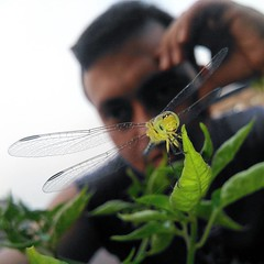 selfie with a dragonfly  #selfie #dragonfly (Tarek_Mahmud) Tags: instagramapp square squareformat iphoneography uploaded:by=instagram