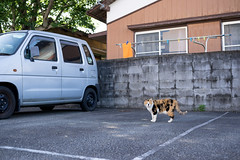 猫 (fumi*23) Tags: ilce7m2 sony 40mm ef40mmf28stm mc11 sigma cat canon parking miyazaki street ねこ 三毛猫 猫 キヤノン 駐車場