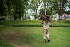 Fire Wood 1 (Usman Akram Bhatti) Tags: baghejinnah lawrence garden lahore golden hour nikon d750 firewood basic needs trees