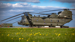 """Chinooks at Rest"" (mattyste92) Tags: chinook raf royal air force rafodiham heli helicopter odiham flight fly h47 mil military hardware aviation avgeek aircraft airport heavy heavylifter lifter royalairforce sunshine sqn squadron lineup pan"