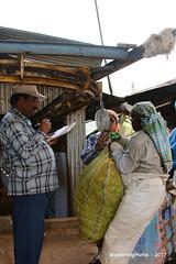 Weighing the morning pickings - Highfields Tea Factory - Coonoor Tamil Nadu India (WanderingPhotosPJB) Tags: india tamilnadu ooty coonoor highfieldsteafactory weighing scales bags heavy tea teapickers