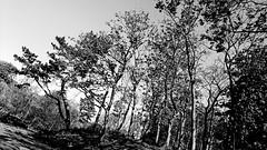 Treescape - England (J Holmes-Leather) Tags: trees bnw parks outdoors nature sky contrast seasons spring england earth world