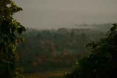 Bodennebel 3 (ES_789) Tags: herbst herbstfarben remstal fellbach morgen nebel sony a6000