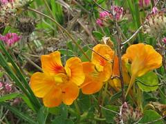 202 (jesust793) Tags: flores flowers naturaleza nature