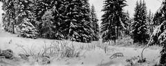 combloux, panorama, 15 (Patrick.Raymond (3M views)) Tags: montagne neige gel hiver froid alpes haute savoie combloux mont blanc argentique lomography tmax horizon perfekt