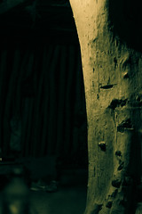 Hidden in the tent (Amr Tawwab) Tags: tent hide hidden tawwab separate evening night dark tree palm leg empty nothing dead desert camp eg egyption egypt egyptian wadi rayyan highcontrast mylens mywork myeye myown mine splendid popular adventure walk canon 700d photography photographing photo ph photographer abstract conceptual travel inside