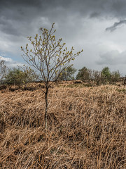 Tree. (CWhatPhotos) Tags: moor gorse bush trees tree yellowflowers flower sky photographs selfie have it photograph pics pictures pic picture image images foto fotos photography artistic that which contain digital cwhatphotos waldridge north east england uk fell wood woods countryside nature views view olympus four thirds camera