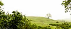 Monte Bello-3 (MohamedMM) Tags: hike montebello palo alto california nature mountains green