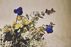 """""""Chaque fleurs à son eau """"  #photo #flower #photographie #photographier (Violencedefemme) Tags: photographier photographie flower photo"""