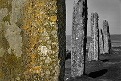 The Ring of Brodgar (PentlandPirate of the North) Tags: ringofbrodgar stenness orkney scotland neolithic henge standing stones