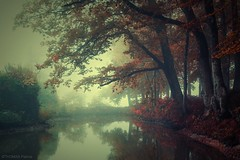 Un matin d'automne ! (pat.thom974) Tags: reflection water fog trees morning autumn