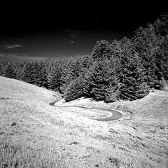 The Long and Winding Road (Scott Holcomb) Tags: mttamalpaisstatepark marin california hasselblad500c carlzeissdistagon14f50mmtlens hoya67mminfraredr72filter 50mmto67mmhasselbladfilteradapter rolleiinfrared400film blackwhiteinfrared 6x6 120film mediumformat epsonperfectionv600 photoshopdigitalization
