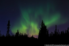 The Northern Lights (westrock-bob) Tags: 6d eos ab alberta amazing aurora auroraborealis awesome canada canon copyright dancinglight light nightsky norhternlights peaceful pine silhouette spruce stars tourism tree