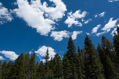 Blue Sky (thomas.hartmann496) Tags: blue branch branches bright cloud clouds evergreen forest green natural nature photo pine sky tree trees weather white wooded woods