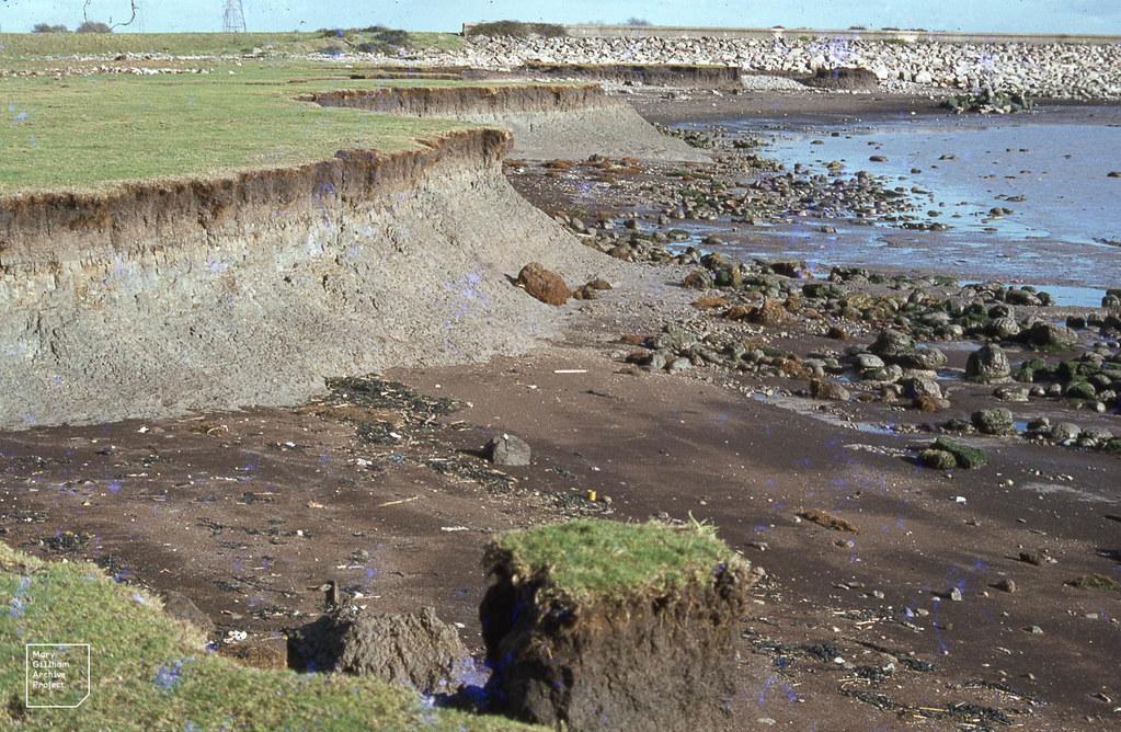 Peaty topsoil, organic clay and pale estuarine clay cliff. Peat fragment on beach. Rumney sea wall. Cley-flecked ferrous blue and ferric orange. 09/11/78