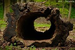 Baumstamm / Tree-Trunk (R.O. - Fotografie) Tags: baumstamm treetrunk log bole loch hole holz natur nature closeup close up rofotografie panasonic lumix dmcfz1000 dmc fz1000 fz 1000 nieheim nrw