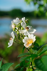 Bright Lights, Pretty Flowers (G.D. Jewell II) Tags: flower nature nikond3400 floralfantasy