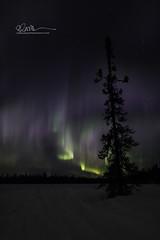 _64A1640 (Ed Boudreau) Tags: alaska northernlights auroraborealis nightphotography nightsky stars aurora winter winterscene winterscape landscape alaskalandscape landscapephotography auroratrapperscreek petersvillerd auroracolors
