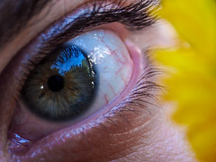 The Dandelion of My Eye (marcy0414) Tags: daniel eye macro dandelion reflection macromondays macromonday eyes yepyep