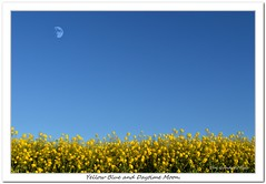 Yellow Blue and Daytime Moon (Oul Gundog) Tags: yellow blue daytime moon groomsport co down northern ireland ulster rape seed plant sky landscape