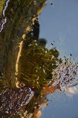 Pou Comú, Pou de l'Horta, Pou Major o Pou dels Moros, entre Santa Fe i La Granada (esta_ahi) Tags: lagranada poucomú poudelhorta poumajor poudelsmoros santafe penedès barcelona spain españa испания algas