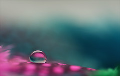 In my dream (Niara Art) Tags: macro waterdrop drop colour color colorful reflection refraction bokeh experiment liquid water