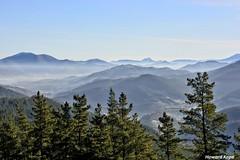 Bruma. (Howard P. Kepa) Tags: paisvasco euskadi bizkaia balmaseda montekolitza montebocinero pinos montes brumas invierno kolitza