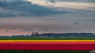 I miss these colors in the polder