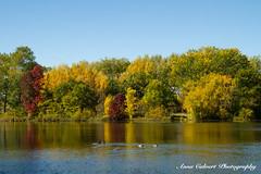 Autumn colours (Anna Calvert Photography) Tags: annacalvertphotography landscapes nature outdoors plants molongloriver trees autumn water river canberra australia ducks