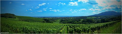 Panorama Erlenbach - haut-rhin (jamesreed68) Tags: nature 68 hautrhin alsace vignoble soultz erlenbach vieilarmand wuenheim france panorama kodak easyshare c183
