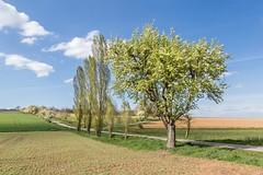 auf dem Land (SonjaS.) Tags: landschaft landscape frühling spring bäume baum tree blüte blau blauerhimmel wolken