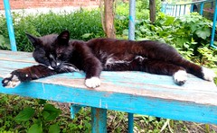 Tima (Irina.yaNeya) Tags: cat pet animal russia black nature bench color summer sleep gato rusia negro naturaleza verano banco قط حيوان روسيا أسود طبيعة مقعد الصيف кот питомец животное россия черный природа лавка лето