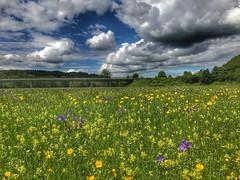 Mountainbike Tour über die schwäbische Alb Teil zwei (Blende2,8) Tags: brücke badenwürttemberg reutlingen wolken himmel wiese wiesenblumen butterblume wiesenstorchschnabel