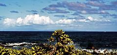 island island leaf (JonathanMorse) Tags: hawaii oahu sandybeachpark pacificocean beachnaupaka lanai molokai sky